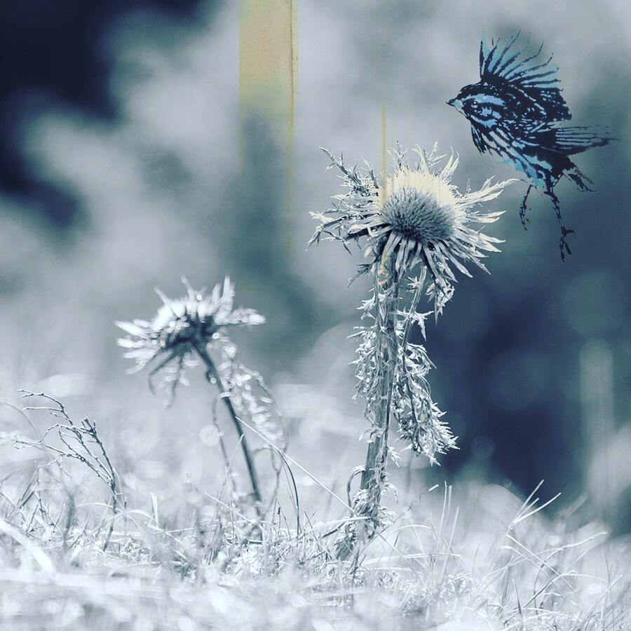 nature perdue
